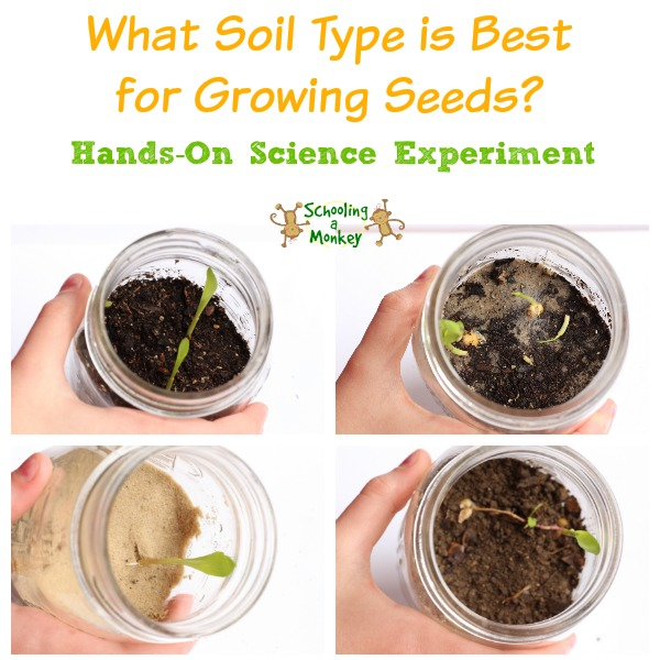 4 jars with different soils for growing seeds science experiment.
